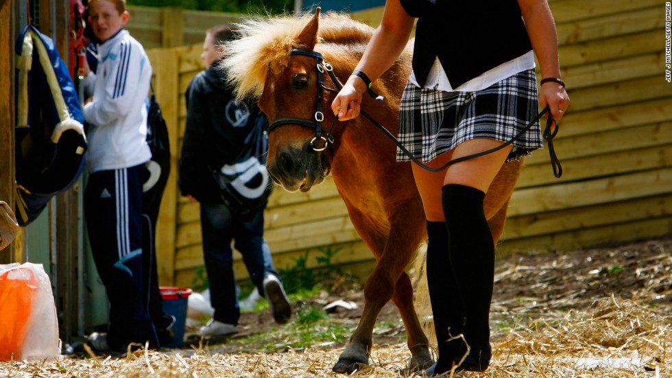 Shetland ponies, one of several breeds of miniature horses native to the United Kingdom, were first bred as mining ponies. Nowadays, miniature horses are bred either as companion pets or to competitively show and jump. They're also often used as therapy animals. With a life expectancy that can reach 40 years, they're as intelligent as dogs -- some owners might argue, even smarter.