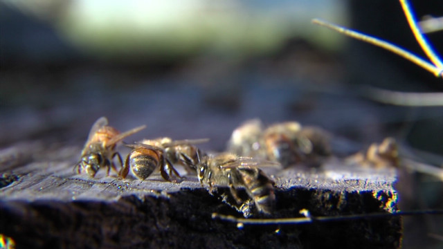 Park employees attacked by killer bees