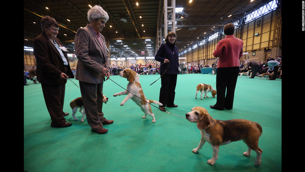 Owners show their dogs on the first day of Crufts on Thursday, March 7.