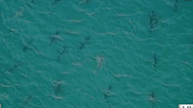 Sharks at spring break!