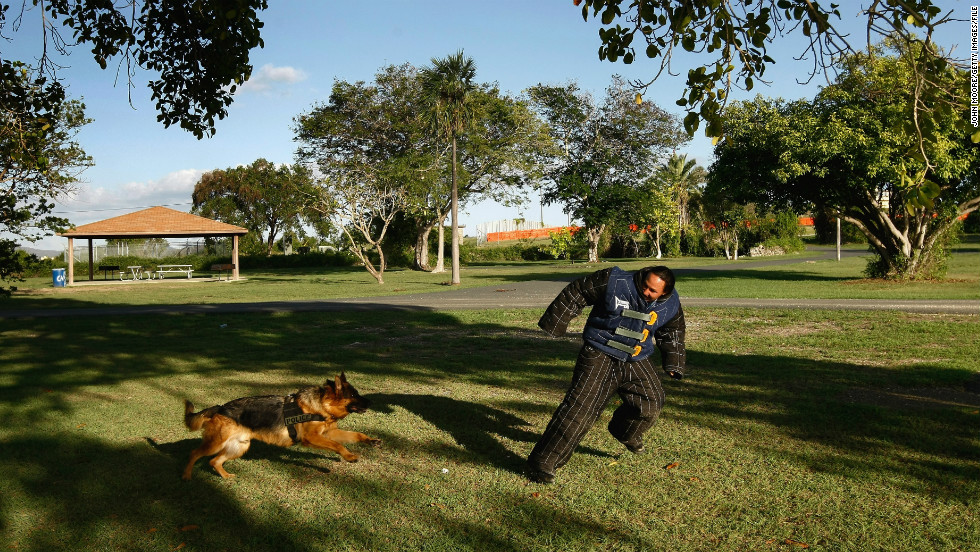 A German shepherd police dog undergoes training exercises in October 2009 at Guantanamo Bay.