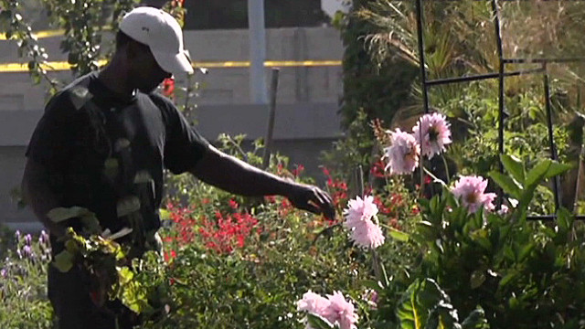 The gangsta gardener of South Central LA