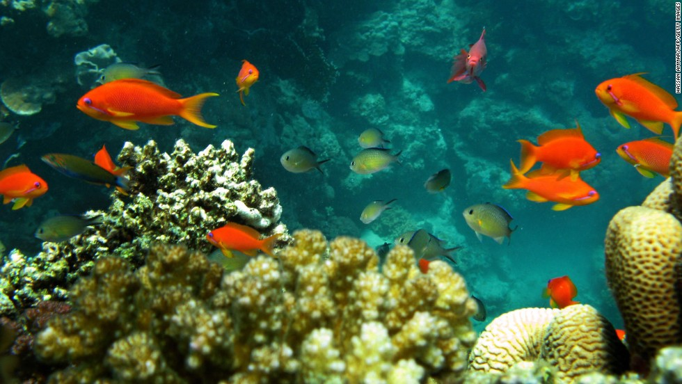 Currents estimates suggest 30% of coral reefs will be endangered by 2050, says O'Dor.
