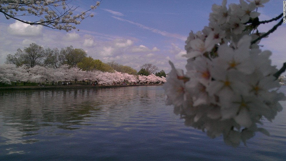 The Tidal Basin has approximately 3,750 cherry trees, creating an explosion of color along the shoreline and in the water's reflection.