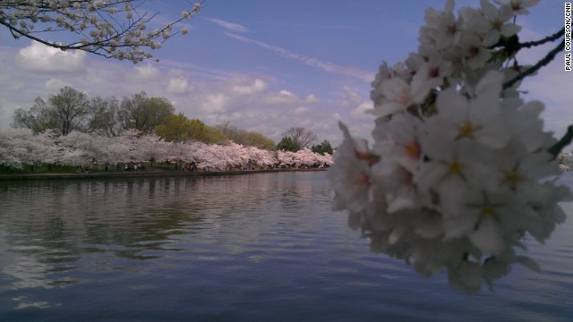 Last year, Washington's cherry trees blossomed early; this year, the political climate warmed first, says Ira Shapiro.