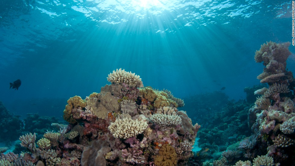 """The two worst things in my mind happening to oceans are global warming and ocean acidification,"" says Ron O'Dor, professor of marine biology at Dalhousie University in Halifax, Canada. ""They're going to have terrible effects on coral reefs. Because of acidification essentially, the coral can't grow and it's going to dissolve away.""<br />"