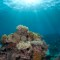 oceans coral catlin