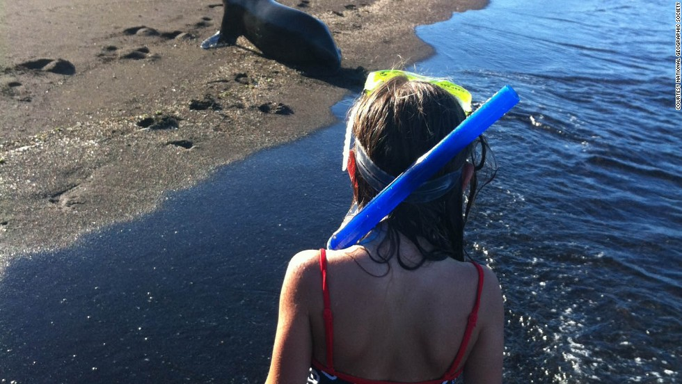 No doubt the Galapagos is an expensive trip with or without children. But visitors to the protected islands can see how animals have evolved over time without any fear of humans.