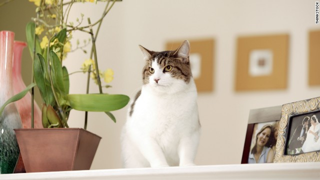 So you figured out it was your cat's bladder that was killing your houseplants. Now what?