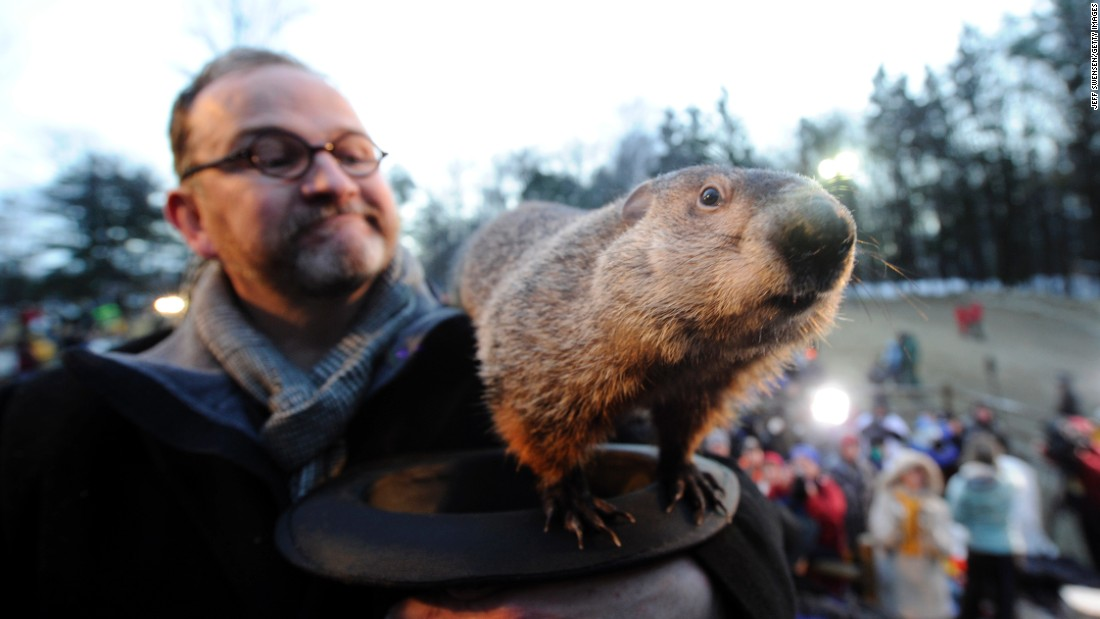 "This is the famous Punxsutawney Phil in Punxsutawney, Pennsylvania. <a href=""http://www.groundhog.org/groundhog-day/history/"" target=""_blank"">Groundhog Day</a> is a tradition in the United States and Canada that celebrates a groundhog's emergence from his winter den. Superstition holds that if a groundhog sees his shadow as he leaves the burrow, there will be six more weeks of winter weather. If the groundhog does not see his shadow, you can expect an early spring. Native Americans also have traditions of animals predicting the weather, and<a href=""http://www.native-languages.org/legends-groundhog.htm"" target=""_blank""> groundhogs figure prominently in their religions and mythology</a>."