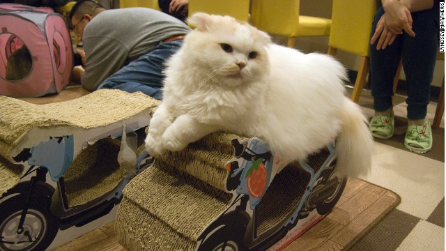 """Tokyo has more than a hundred """"neko"""" or cat cafes."""