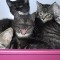 cat lovers poezenboot