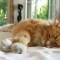 cat lover hemingway florida