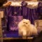 cat lovers supreme cat show UK