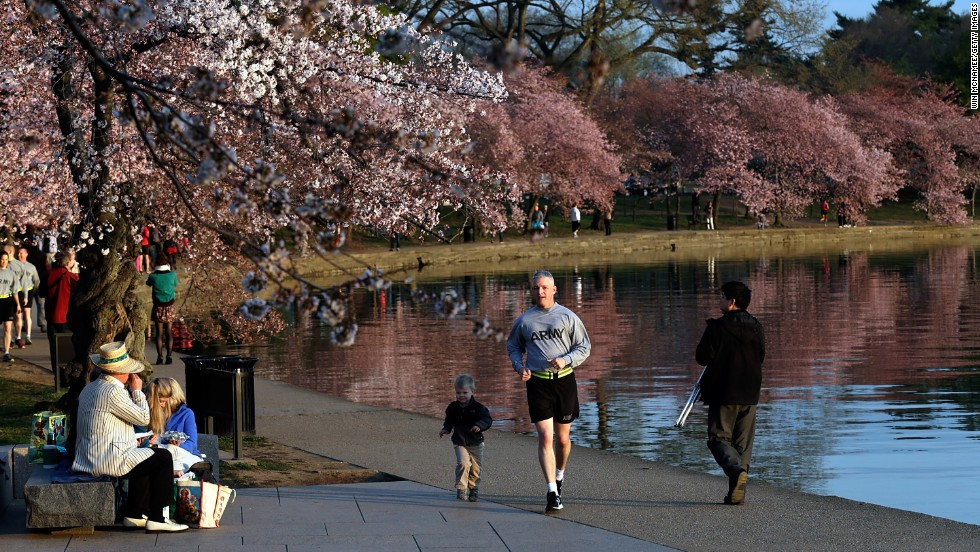 "A jogger and young companion run beneath the cherry blossoms on April 8. Washington's colder than usual March and early April delayed the <a href=""http://www.cnn.com/video/#/video/bestoftv/2013/03/20/exp-point-travis-cherry-blossoms-delayed.cnn"">beginning of cherry blossom season</a>."