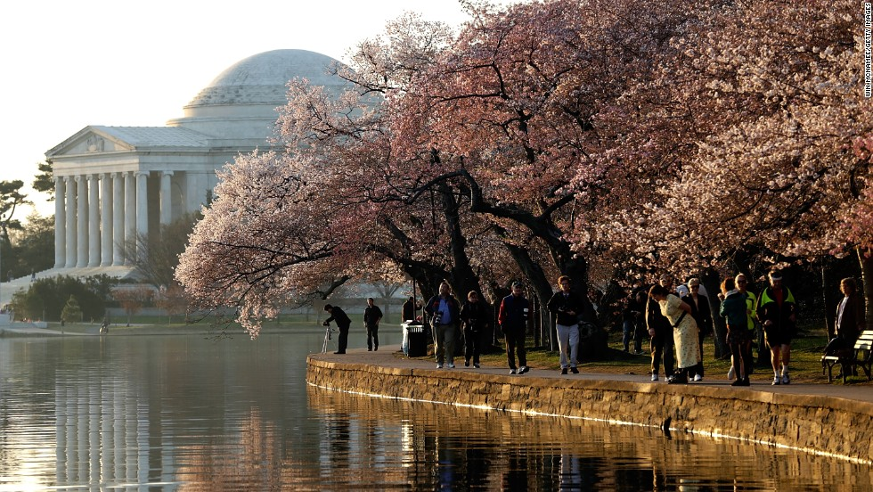 A wall of cherry blossoms hides the view of the Jefferson Memorial on April 8. The time of peak bloom occurs when 70% of the blossoms on the Yoshino cherry trees along the Tidal Basin are open.