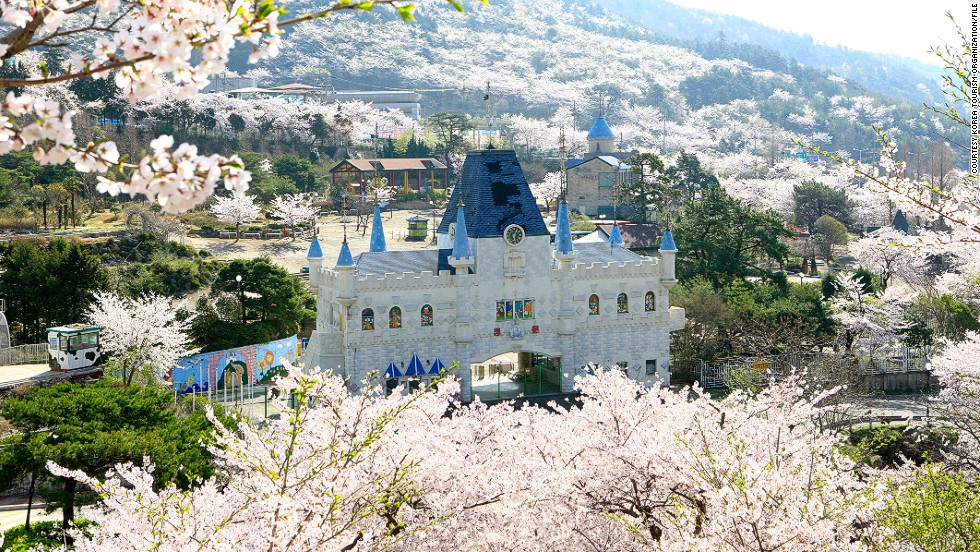 Jinhae's cherry blossom festival began in 1952.