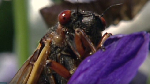 lead dnt mcpike cicadas are back_00022710.jpg