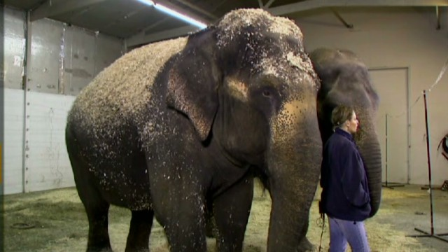 Circus elephant improves after shooting