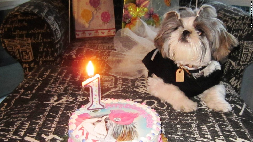 "San Diego resident Shila Hooshmand celebrated Ruffle's first birthday in a big way.  ""It's the closest thing I have to a child thus far,"" Hooshmand said."