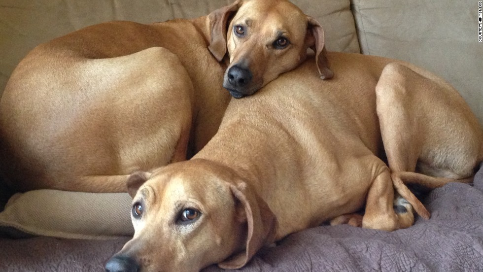 A pet psychic hired by Salt Lake City resident Hikmet Loe for her Rhodesian ridgeback Terra (bottom) said that the dog was disappointed about not going to the beach, as promised.