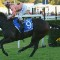 Black Caviar 25
