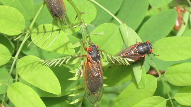 azuz rise of the cicadas_00013114.jpg