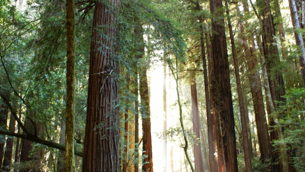 Muir Woods National Monument in Mill Valley, California, boasts hiking among its magnificent redwoods within miles of San Francisco's Golden Gate Bridge.