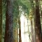 wonders muir woods