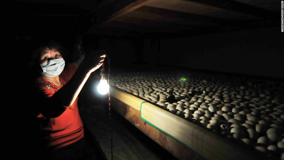 A woman uses a lamp to illuminate a batch of eggs in the hatchery of a duck farm in Zhangzhou on April 14.