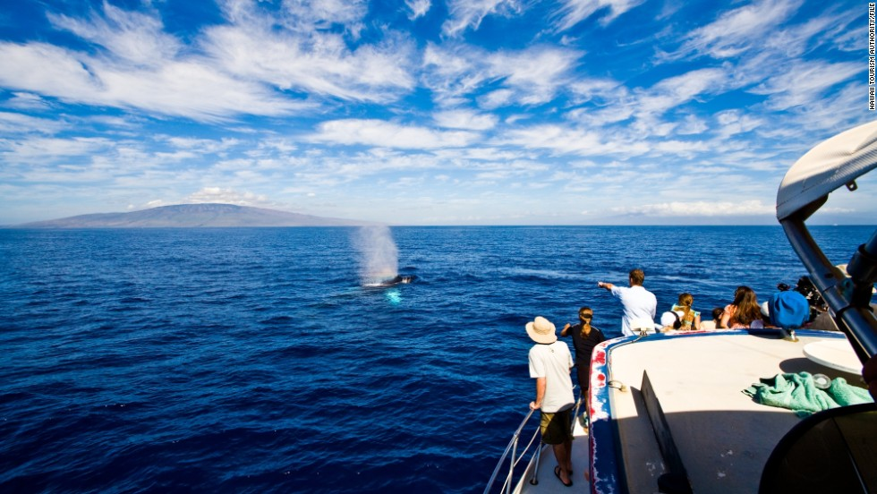 "<a href=""http://www.pacificwhale.org/cruises/Whale-Watch-Cruises"" target=""_blank""><strong>Pacific Whale Foundation, Kihei, Hawaii.<strong></a></strong> </strong>A range of whale watching options, including sunrise and full-moon tours, are offered by the Pacific Whale Foundation, a nonprofit research organization."