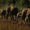 african elephants ia 3