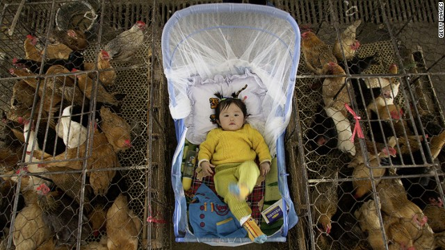 A vendor's child is placed between poultry cages in Wuhan, China, in this file picture