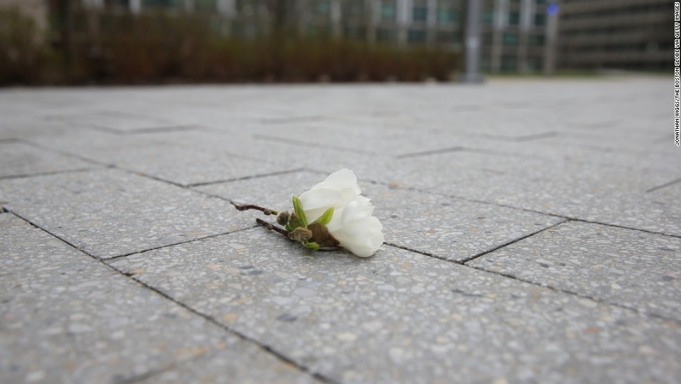 A flower sits near the site where a police officer was killed in nearby Cambridge, Massachusetts.