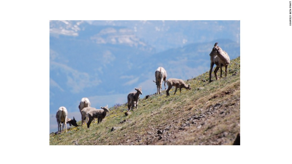 """For a day in Yellowstone National Park, the Mount Washburn hike gives you the best bang for your wildlife, wildflower and scenery """"buck."""""""