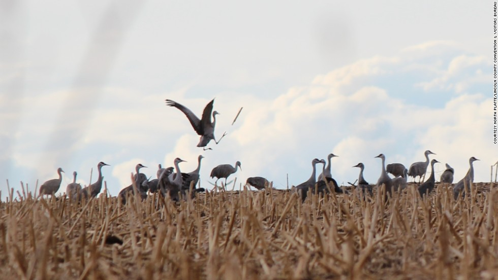 The sandhill crane spring migration, shown here in Nebraska, runs from February to April.