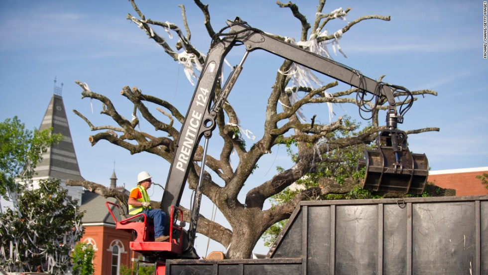 A crane is positioned to bring down the oak on Tuesday.