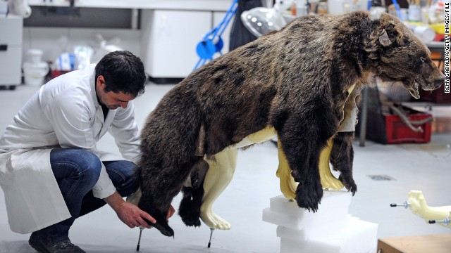 At the Museum of Natural History in Toulouse, taxidermist Brian Aeillo demonstrates how to do this properly.