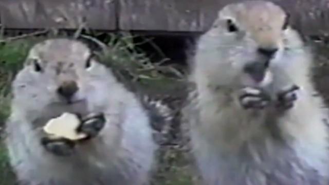orig jtb distraction squirrel potato chips_00004403.jpg