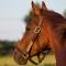 racehorse rapid redux