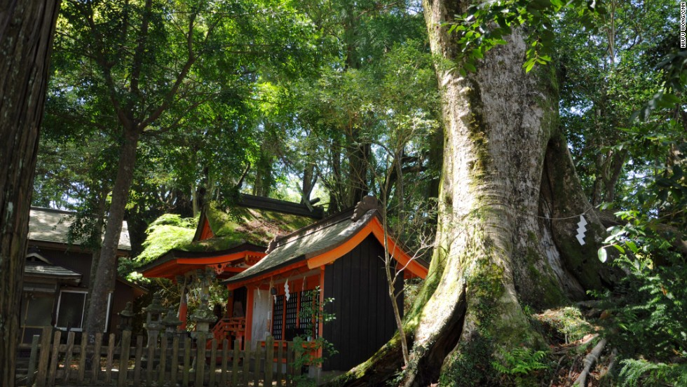 Shrines in Japan usually worship natural objects. Takahara Kumano-jinja enshrines the surrounding ancient trees, which are marked by white folded papers, called shides.