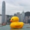 rubber duck in hong kong 2
