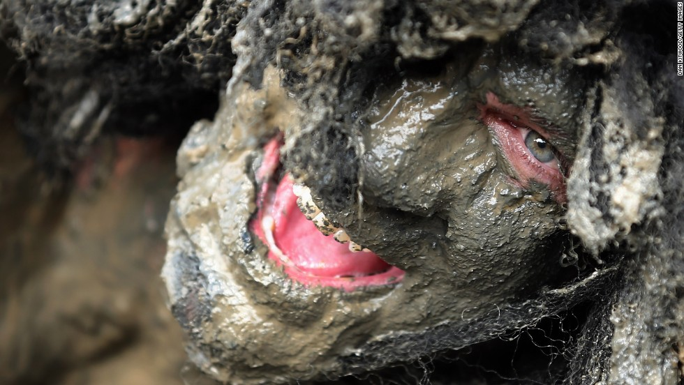 """Joel Hicks, who was running to raise money for the <a href=""""http://www.alwayswithasmile.com/"""" target=""""_blank"""">Always With a Smile</a> charity, takes part in the Maldon Mud Race."""