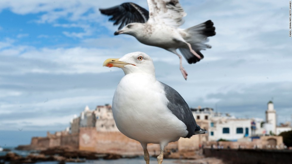 Seagulls land on the fortification walls of the 16th-century Portuguese fortress in Essaouira on October 29.