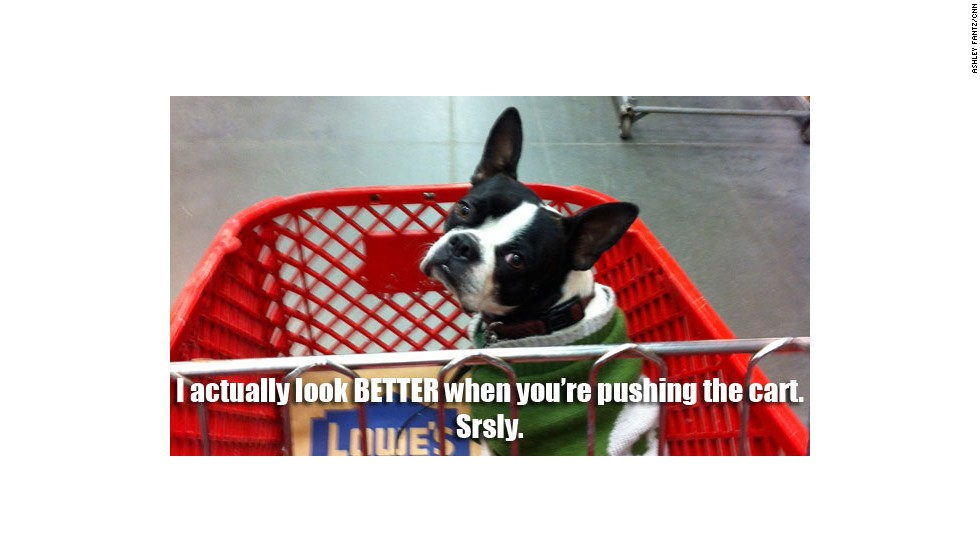 "This is Charlie, CNN.com writer Ashley Fantz's 2-year-old French bulldog-Boston terrier mix, also called a Frenchton. ""He's named after Charlie Sheen,"" she said, because she got him when Sheen was having his meltdown, ""but also goes by Charlie Tuna or Mr. Poops."""