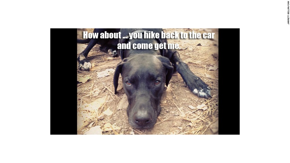 "This Great Dane-mixed-with-other-stuff is Mikey, the constant companion of CNN.com video producer Jarrett Bellini. ""Mikey loves to go for car rides,"" he said. ""He loves them so much, in fact, that he barfs pretty much every time."""