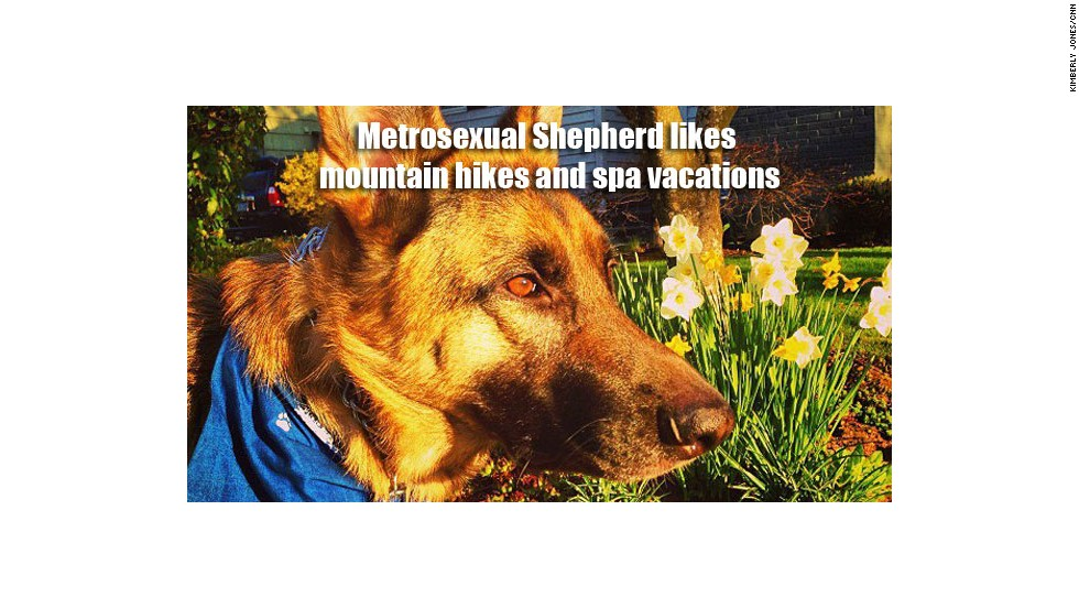 "This is Gus Williams, German shepherd and family pet of Kimberly Jones from the CNN digital marketing team. ""He's both outdoorsy and pampered,"" she said of the dog, who goes on special hikes with other German shepherds and tags along on weekend spa getaways with his owners."