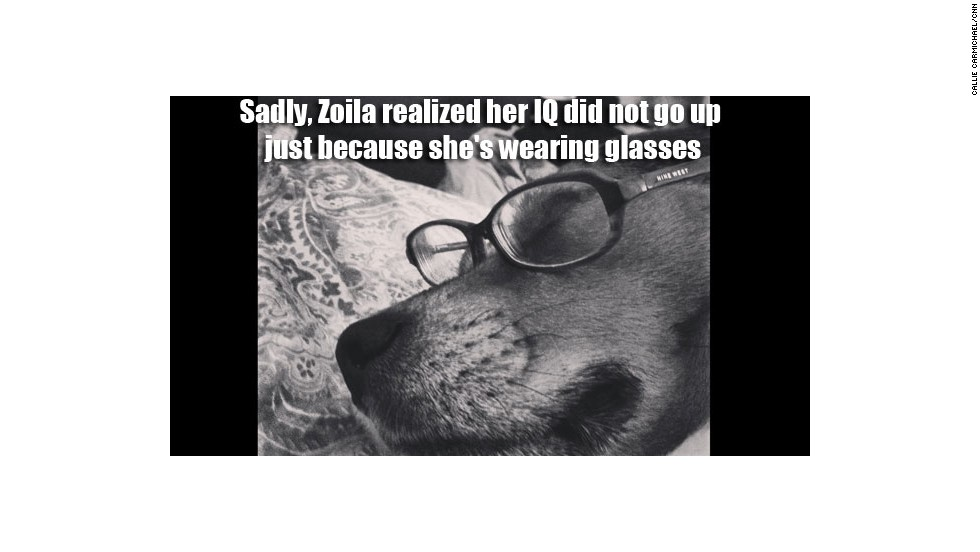 Zoila is CNN.com mobile senior associate producer Callie Carmichael's self-conscious beagle.