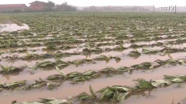 vo china torrential rain flood_00004607.jpg