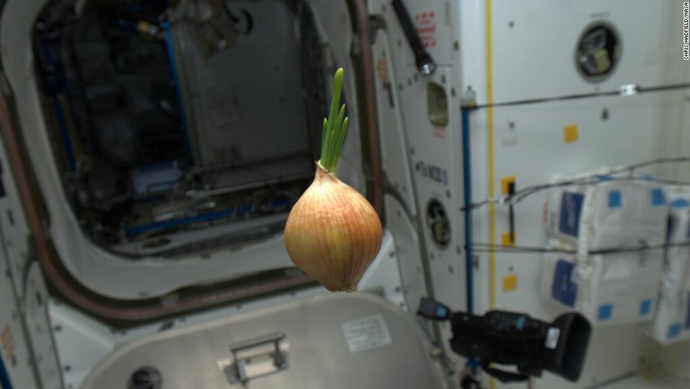 "This floating <a href=""https://twitter.com/Cmdr_Hadfield/status/329882960033624065"" target=""_blank"">space onion</a> was photographed on May 2. Hadley wrote that it ""came up on the Progress resupply spaceship. We sliced it up and had it with everything -- nice flavor!"""